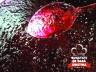 Dulceata de afine (400gr)